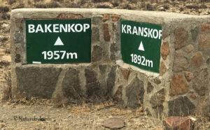 Kranskop height