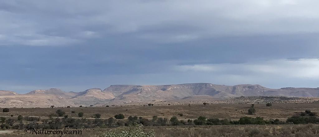MZNP Scenery