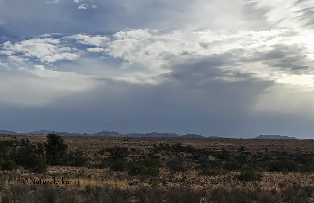 MZNP View
