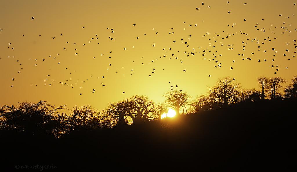 Makuleke Sunrise